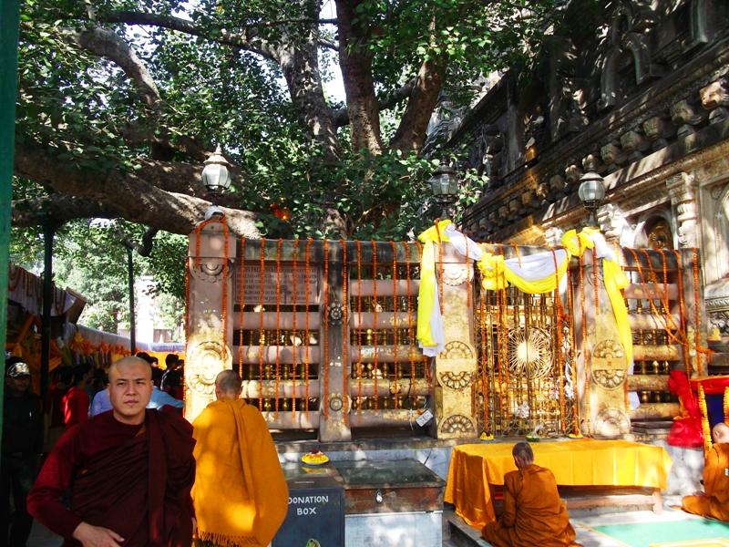 The Bodhi tree under which Buddha got enlightenment