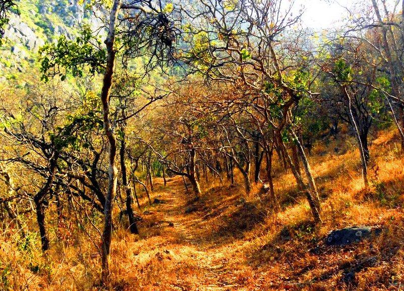 Forest thorugh which we then trekked