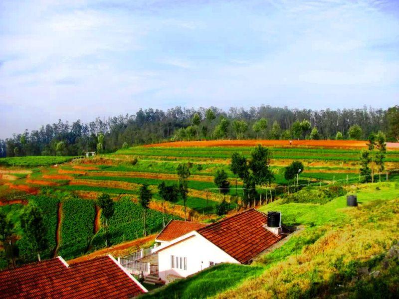 Carrot terrace farming, Ooty