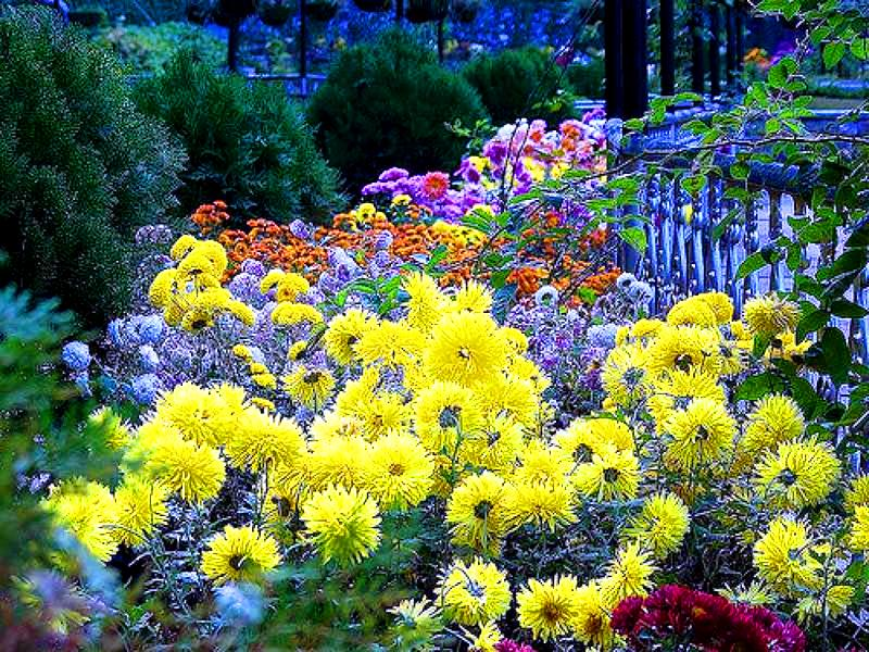 Flowers at Municipal Garden