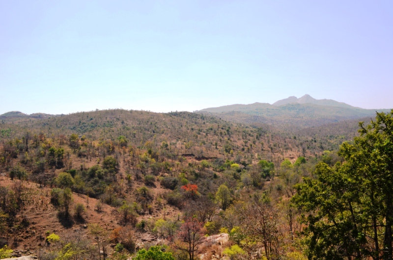 Dry stretch of forests over miles