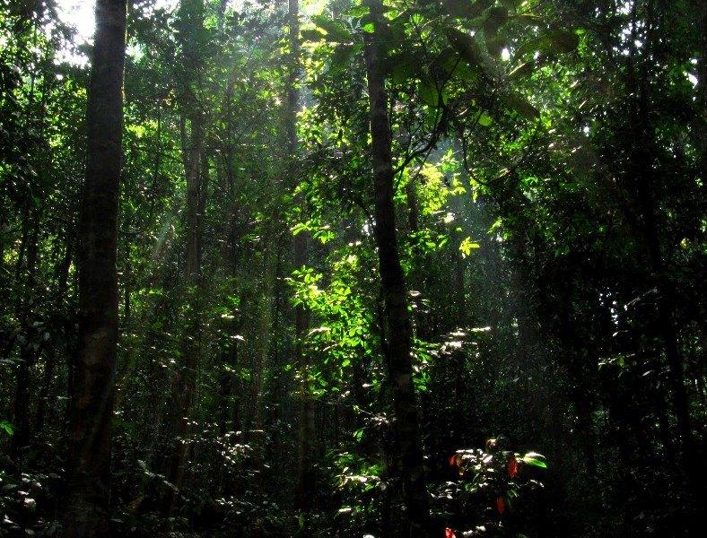Kumara parvatha forest