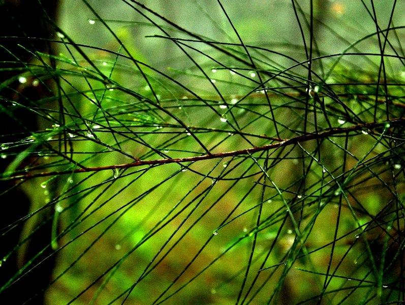 Grasses holding the precious dew pearl