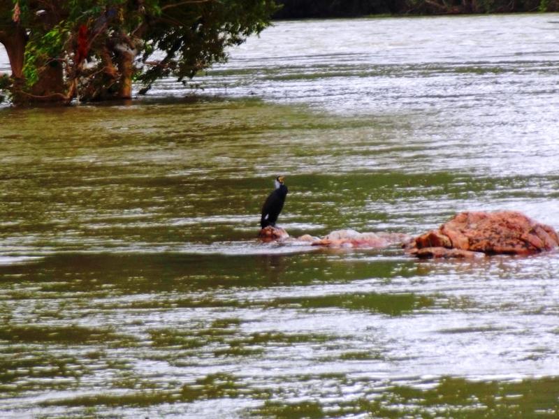 Birds, Bheemeshwari, Cauvery