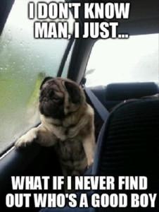 column_15-funny-dog-meme