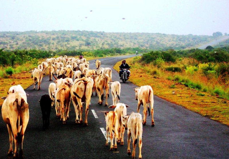 On the way to gandikota fort