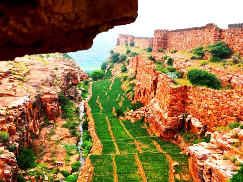 Vegetation at west fort walls