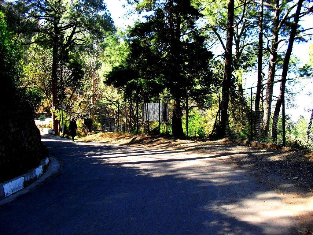 Gilbert trail, Kasauli