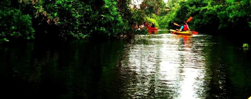 Kayaling in mangroves