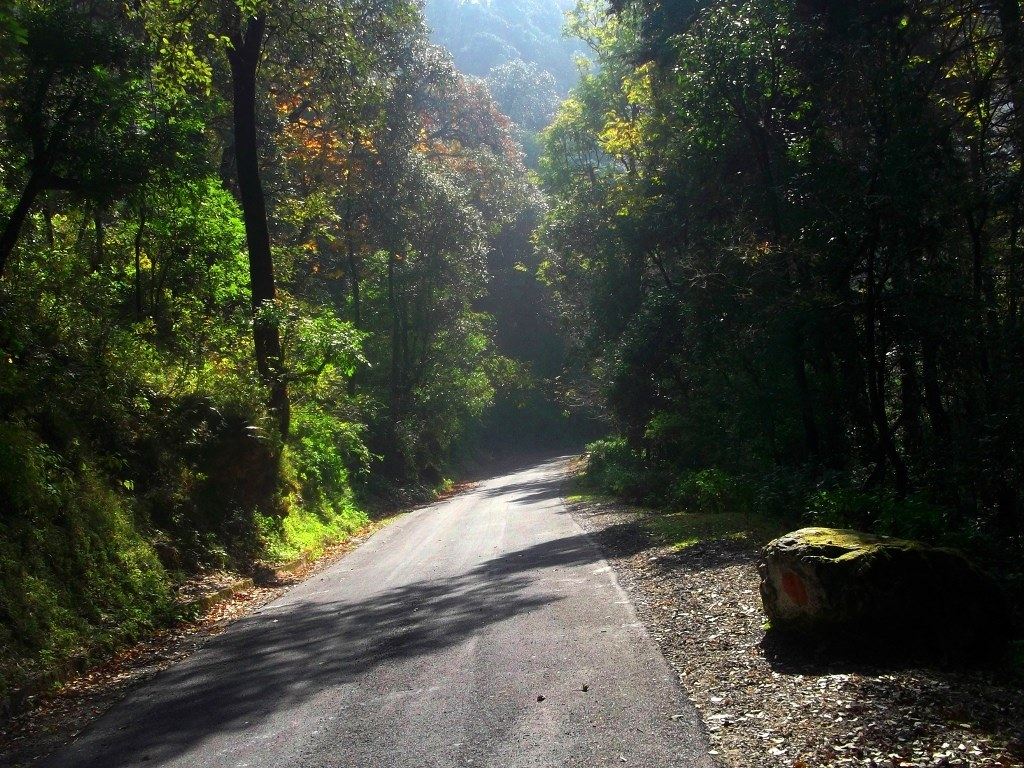 A road leading to a valley in Mussoorie
