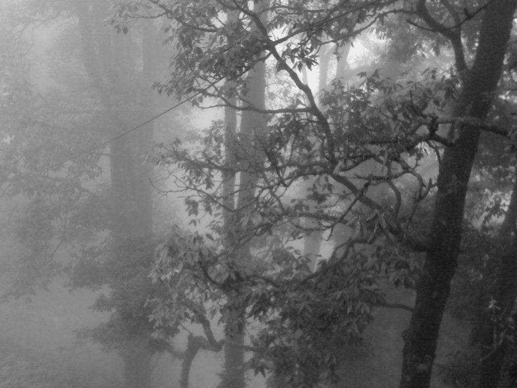 Foggy woods, Mussoorie