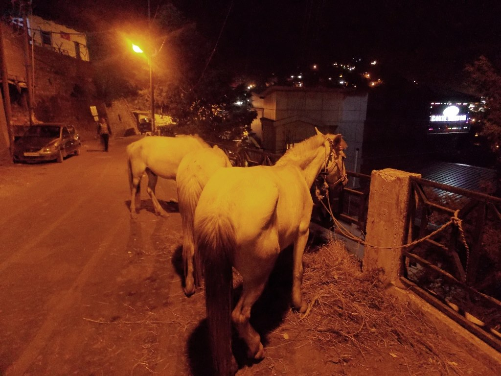 Lonely horses at night in Mussoorie