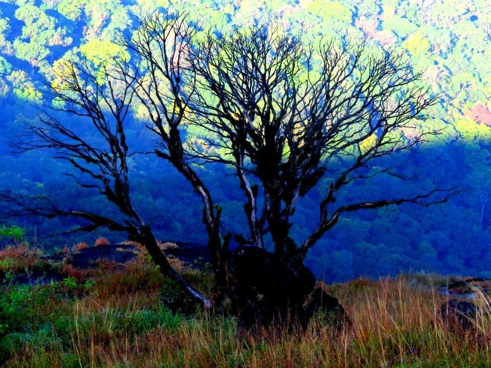 Lonely tree on Kumara parvatha trek