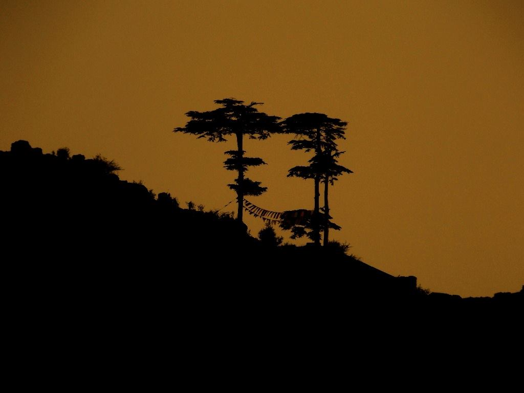 Prayer flags and two lonely trees at dusk, Mussoorie