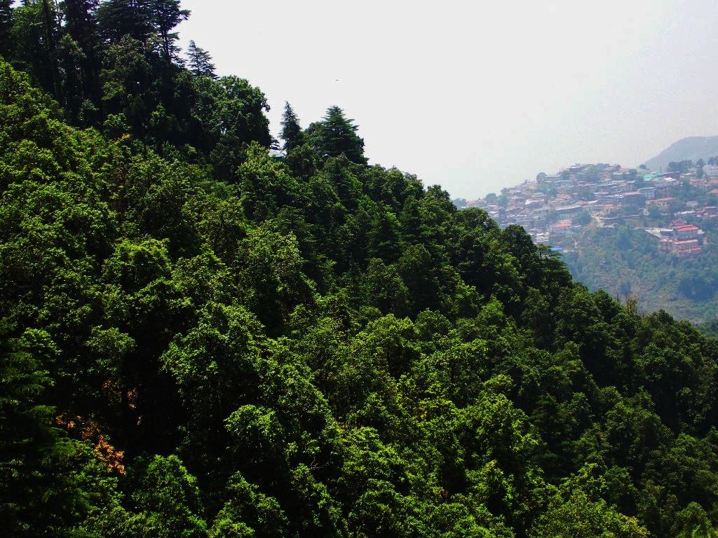 Thick forests and Mussoorie in Background