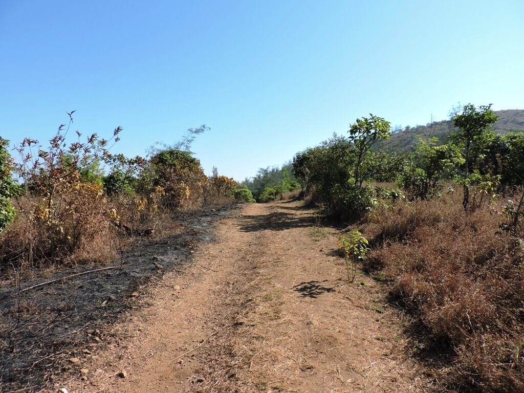 Burnt trail to prevent fire spreading