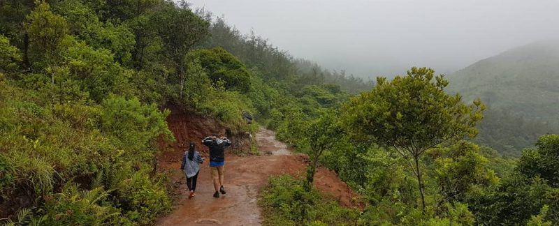 Wide Tadiandamol trekking trail until camping site from forest entry point