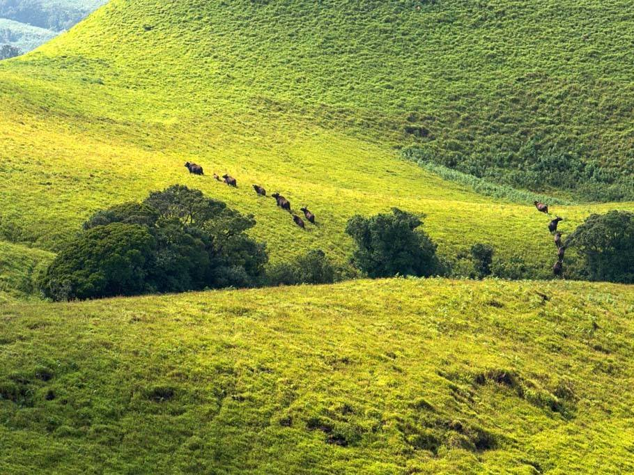 Kudremukh wildlife
