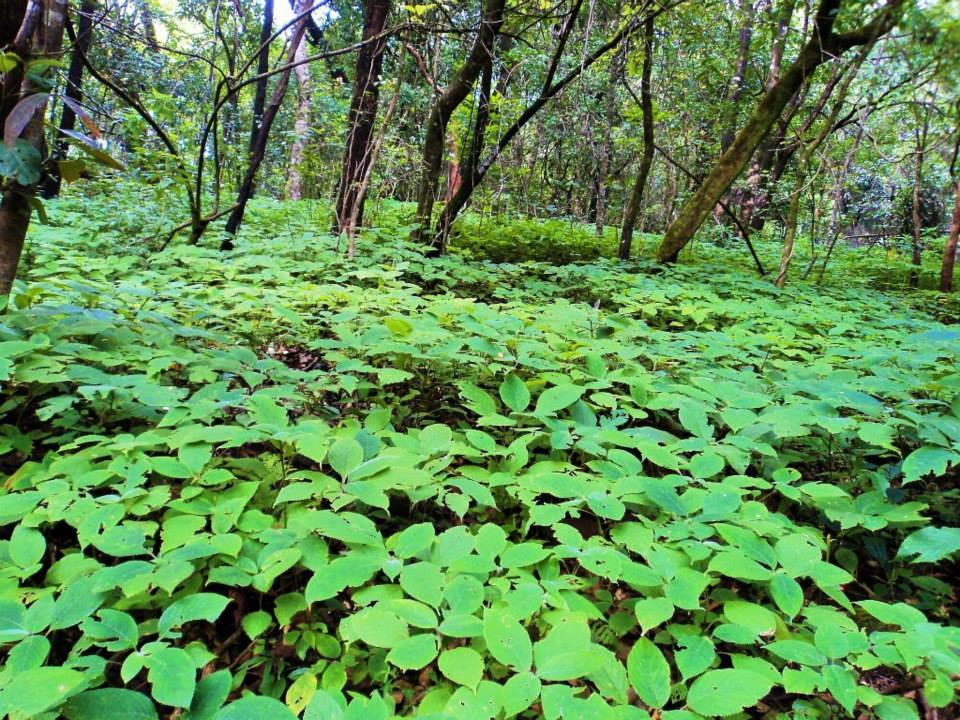 Brahmagiri trek, Kerala, Thirunelli (5)