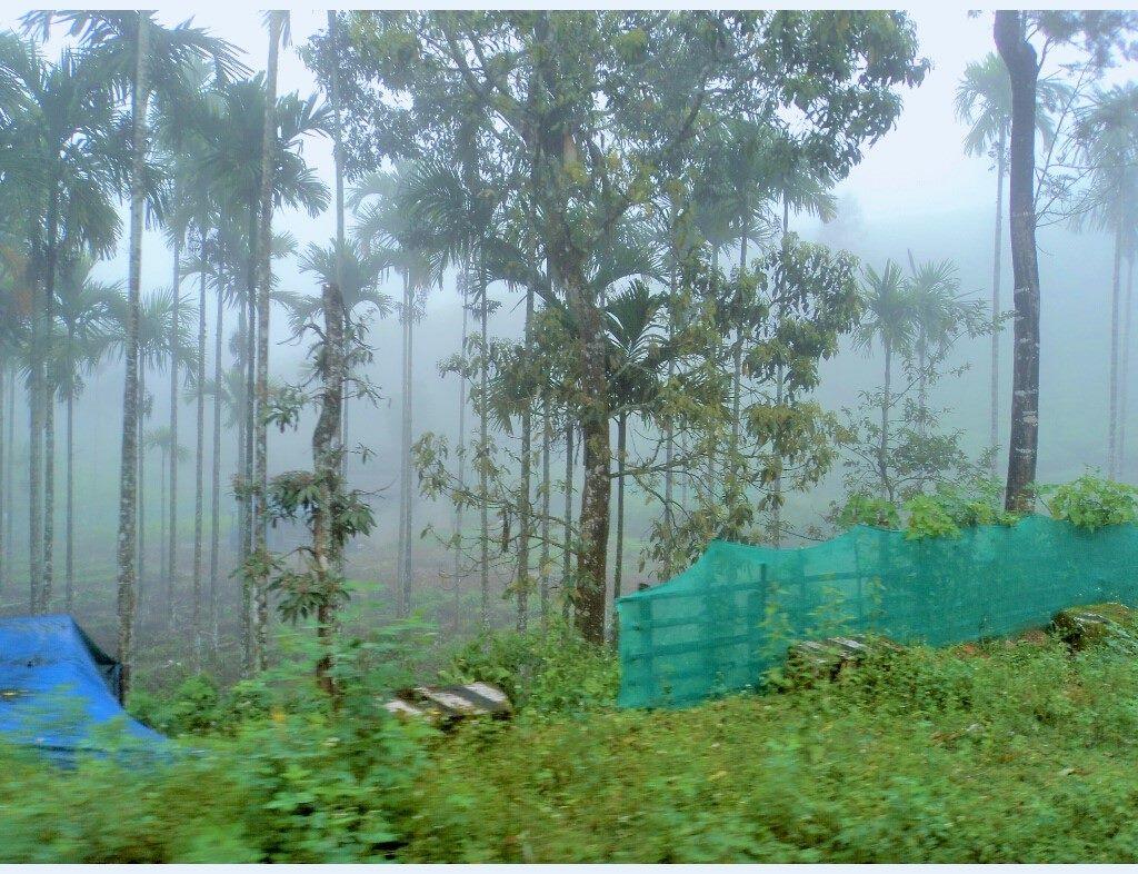 When it rains in Kerala (1)