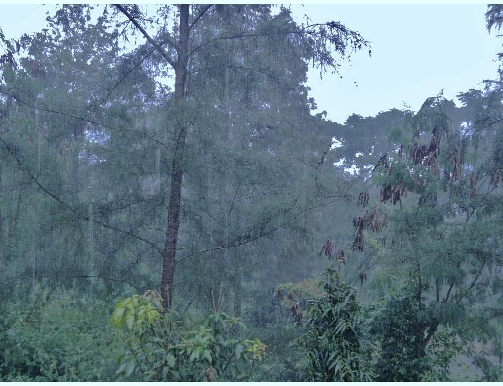 When it rains in Kerala (3)