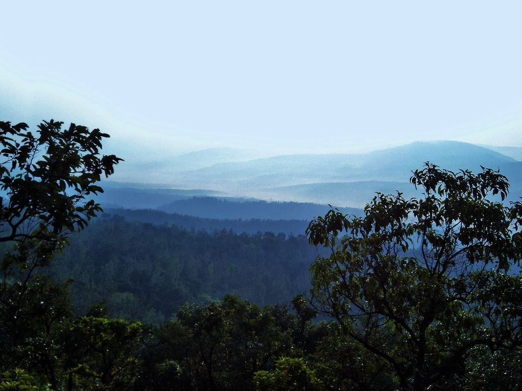 Foggy morning western Ghats