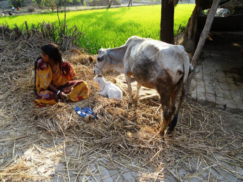 Sundarban lifestyle