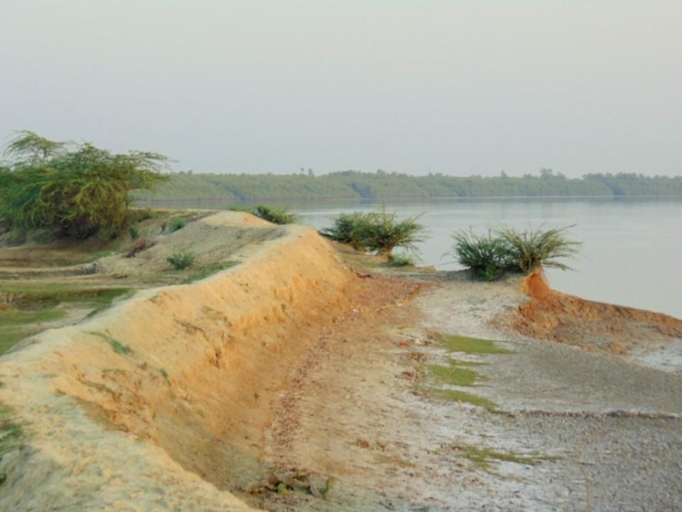 Sundarban flood dikes
