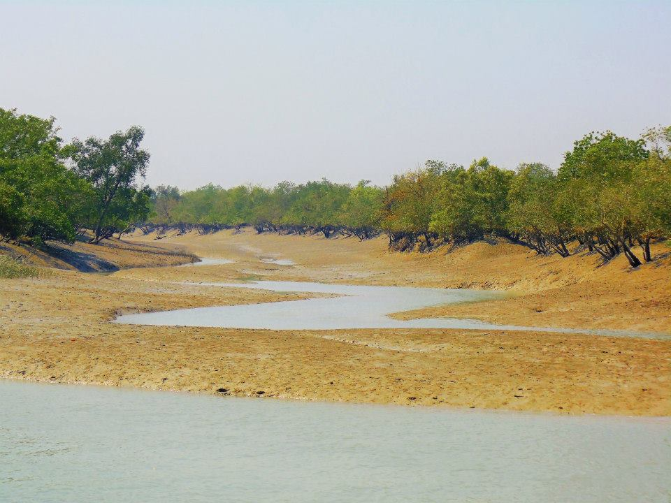 Sundarbans during low tide