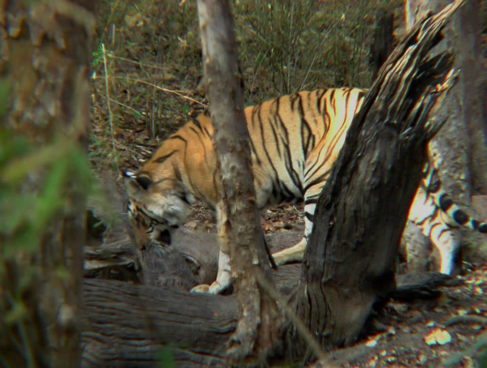 Sundarbans (2)