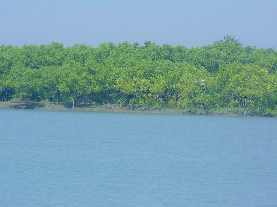 Sundarbans (4)