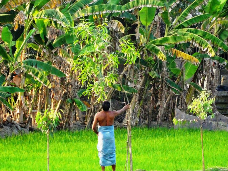 Sundarbans farming