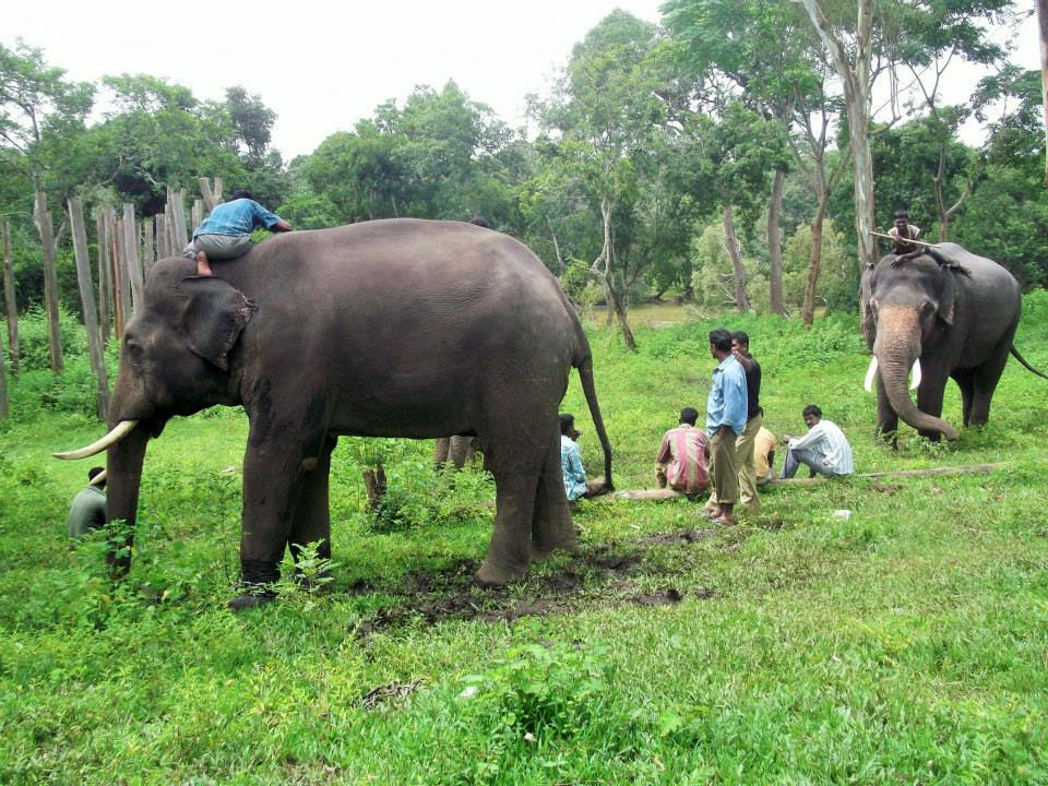 Elephants dubare reserve forests