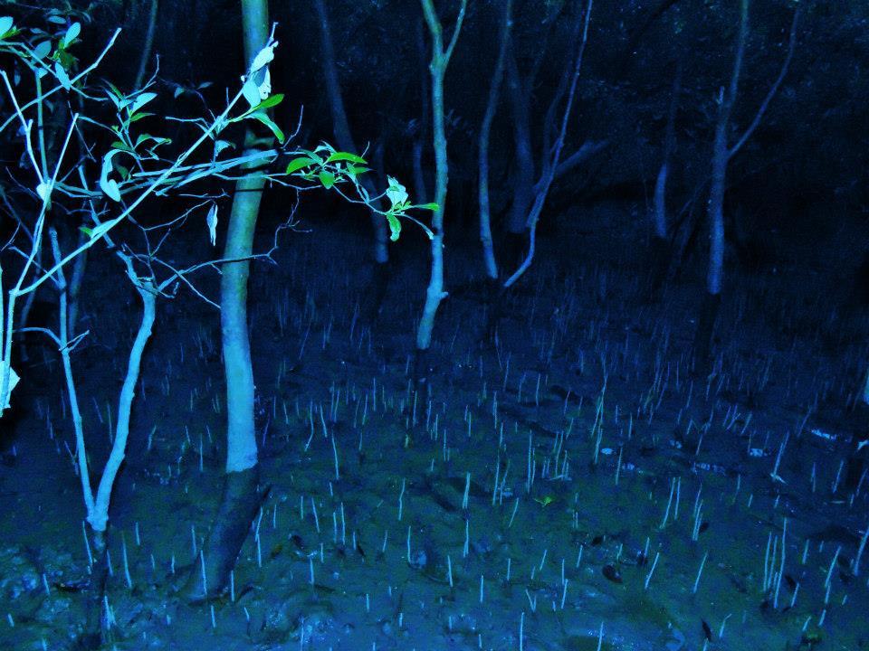 Sundarbans Mangroves at night