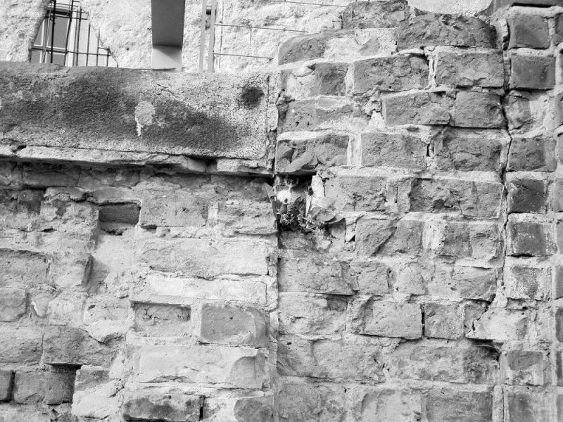 berlin wall (3)