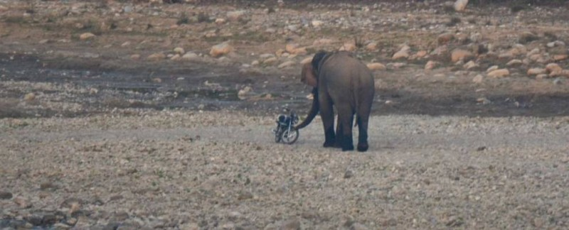 Elephant attacking a bike in Jim Corbett national park