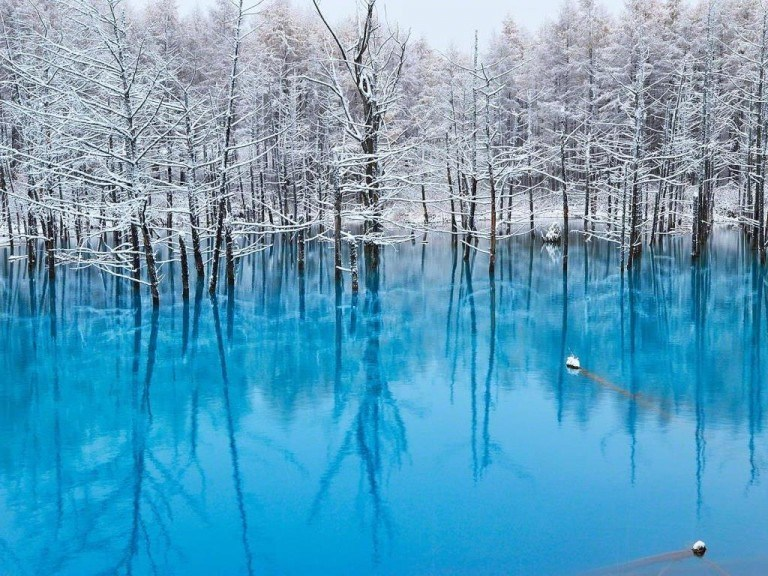 Blue pond nature wallpaper