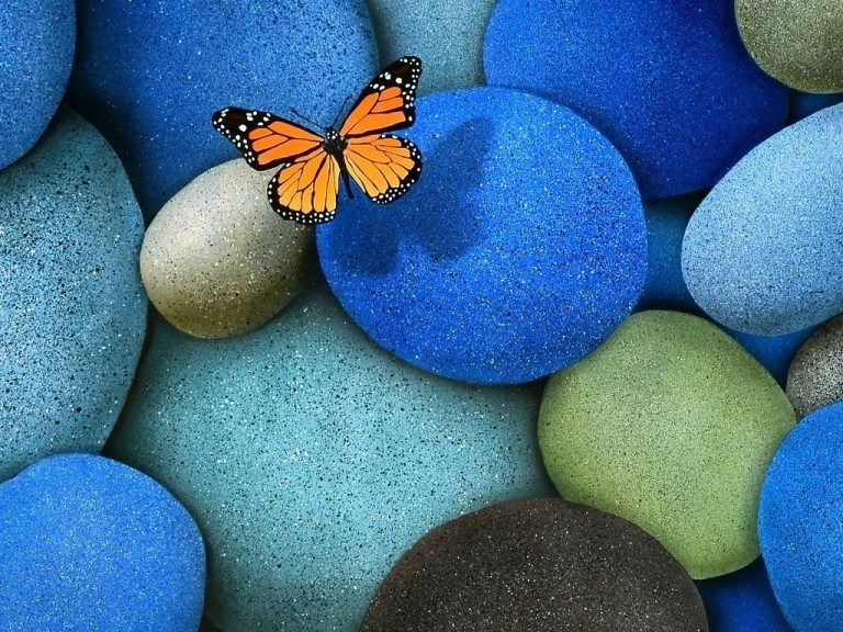 Stones and a butterfly nature wallpaper