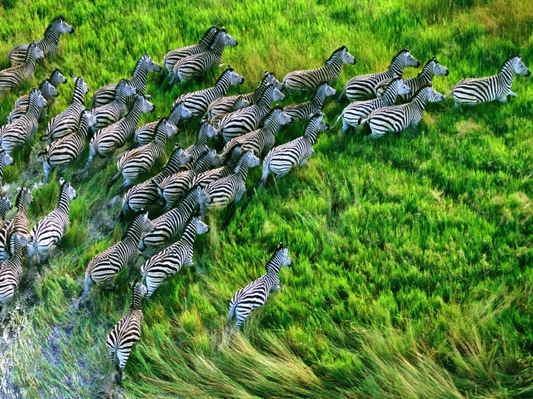 Zebras : Nature wallpaper