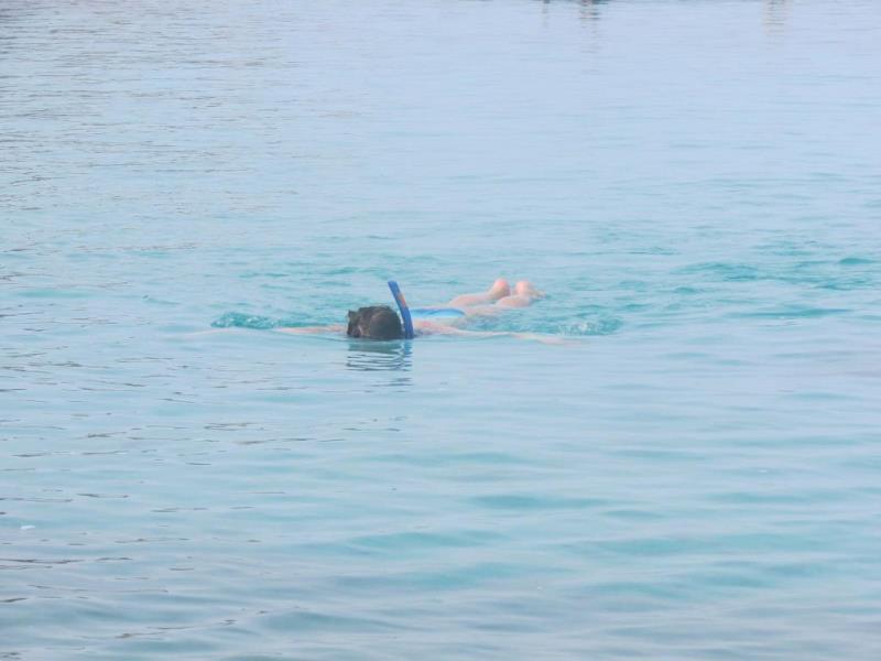 Snorkeling Koh Tao island thailand