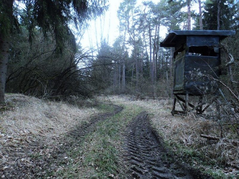 A tractor trail on a hike