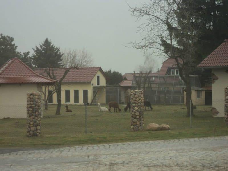 llama-in-a-house
