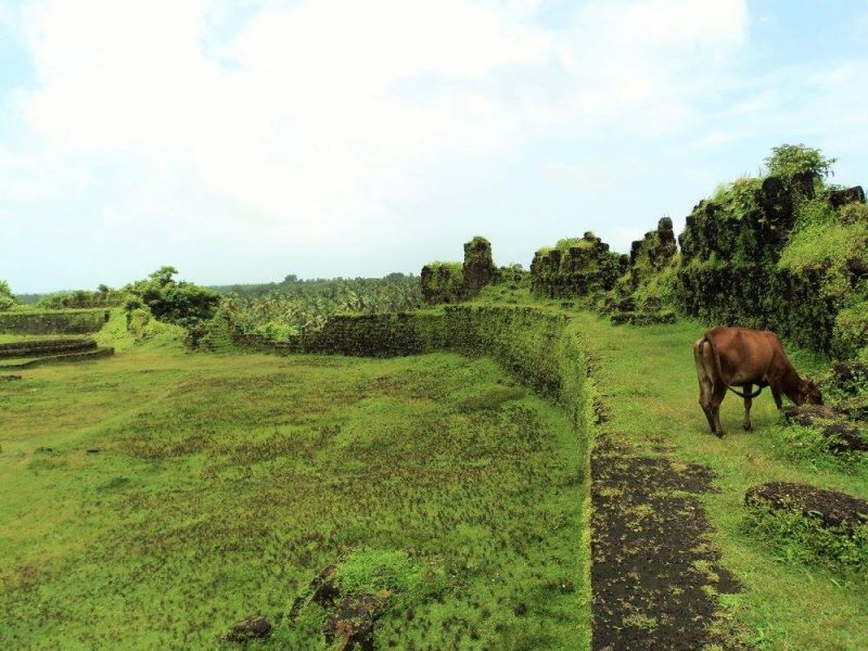 palm-groves-from-mirjan-fort
