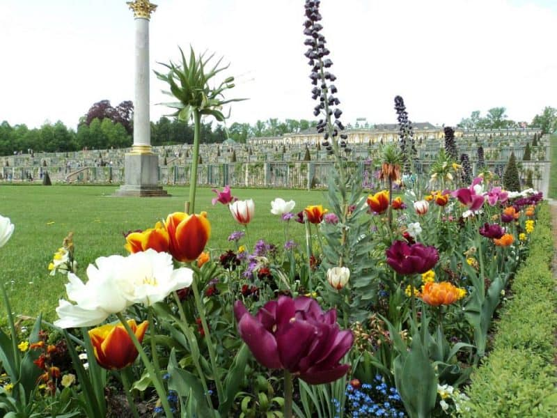 flower-beds-sonssouci-park