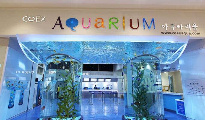 Coax Aquarium Seoul (1)