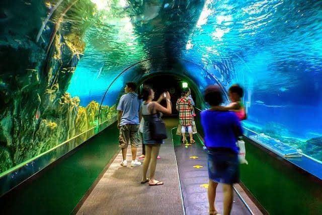 Coax Aquarium Seoul (2)