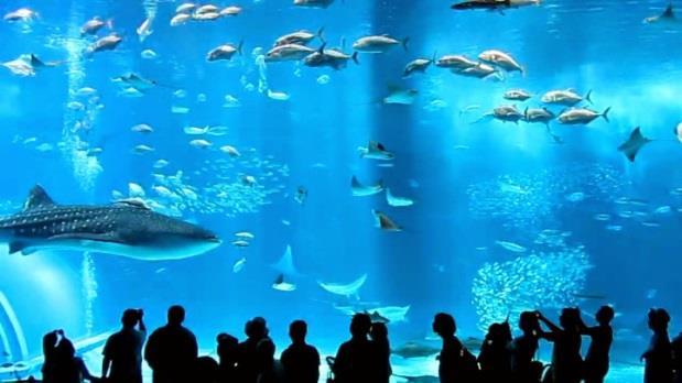 Coax Aquarium Seoul (3)