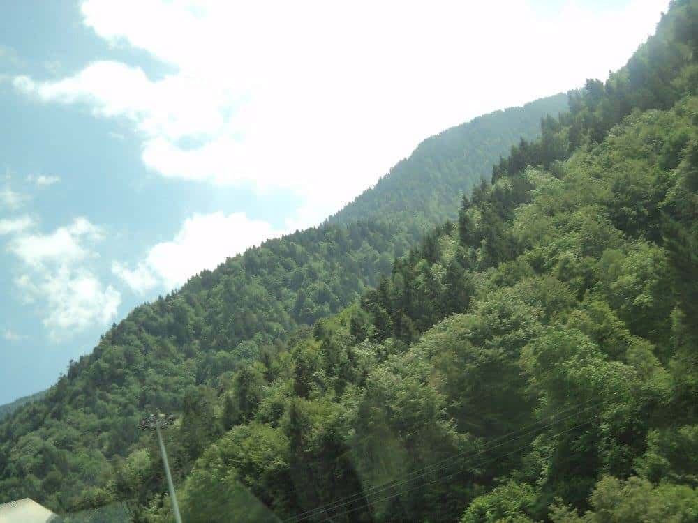 Coniferous forests of alps
