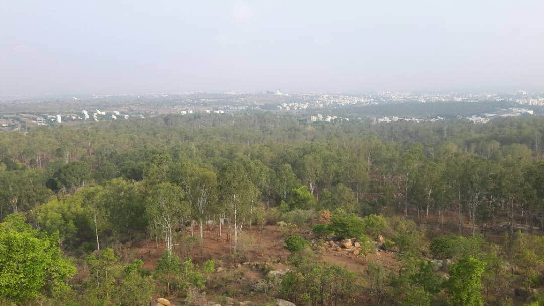 Thurahalli forest view points