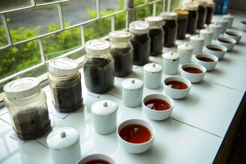 black tea photographed